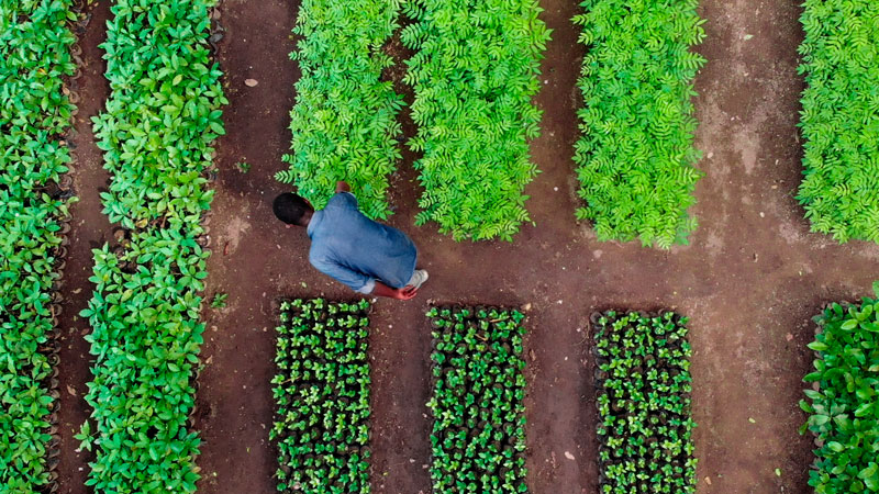 Treedom, a certified B Corp, makes it possible for companies to create a branded forest in a part of the world best suited to their business goals